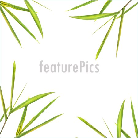 Bamboo Leaf Clipart Image Of Bamboo Leaves Forming