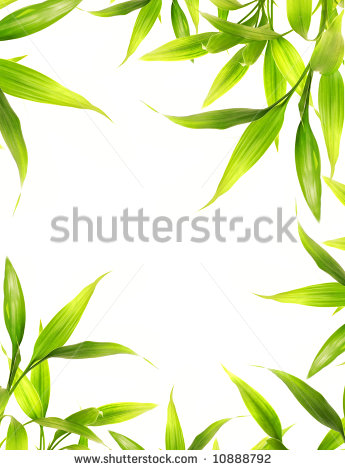 Wallpaper Borders Clipart   Public Bamboo Leaves Border Over