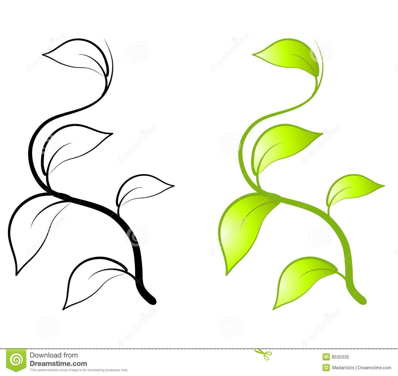 Leaf Vine Clip Art Http   Www Dreamstime Com Royalty Free Stock Photo