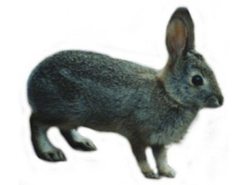 rabbit hutch clipart - photo #42