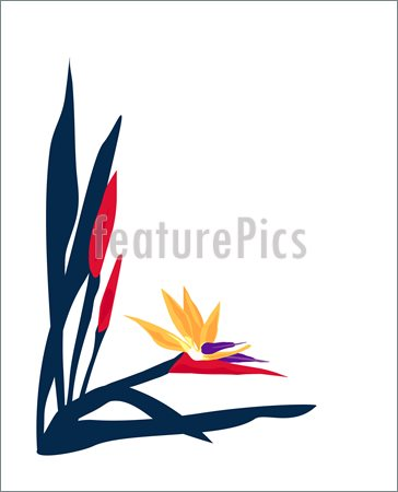 Illustration Of Bird Of Paradise Page Layout    He Brilliant Colors Of