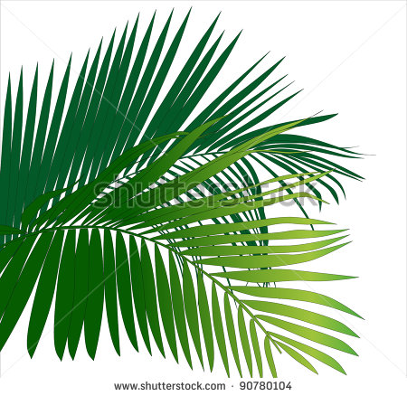 Jungle Rainforest Leaf Plants  Tropical Plants Vector Image    Stock