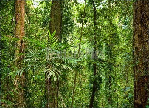 Photo Of Beautiful Plants Trees In Rain Forest