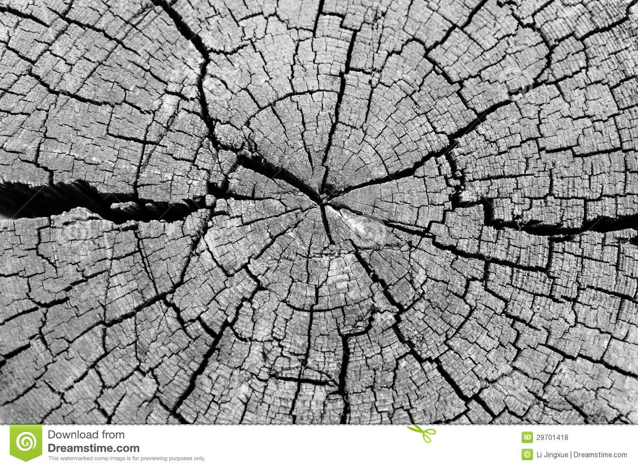 Black And White Cut Log Showing Tree Rings And Cracks