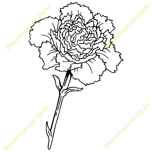 Carnation Flower Line Drawing : White carnation flower clipart suggest