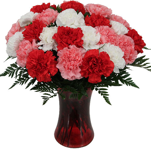 Go Back   Gallery For   Carnations