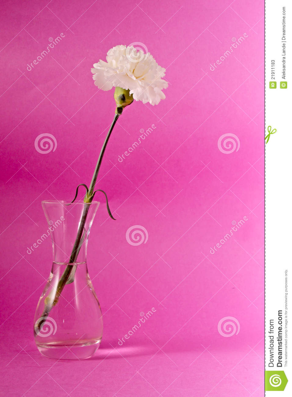 More Similar Stock Images Of   White Carnation Flower