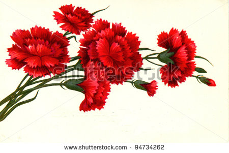 Shows Draw By Artist Grun   Red Carnations Circa 1976   Stock Photo