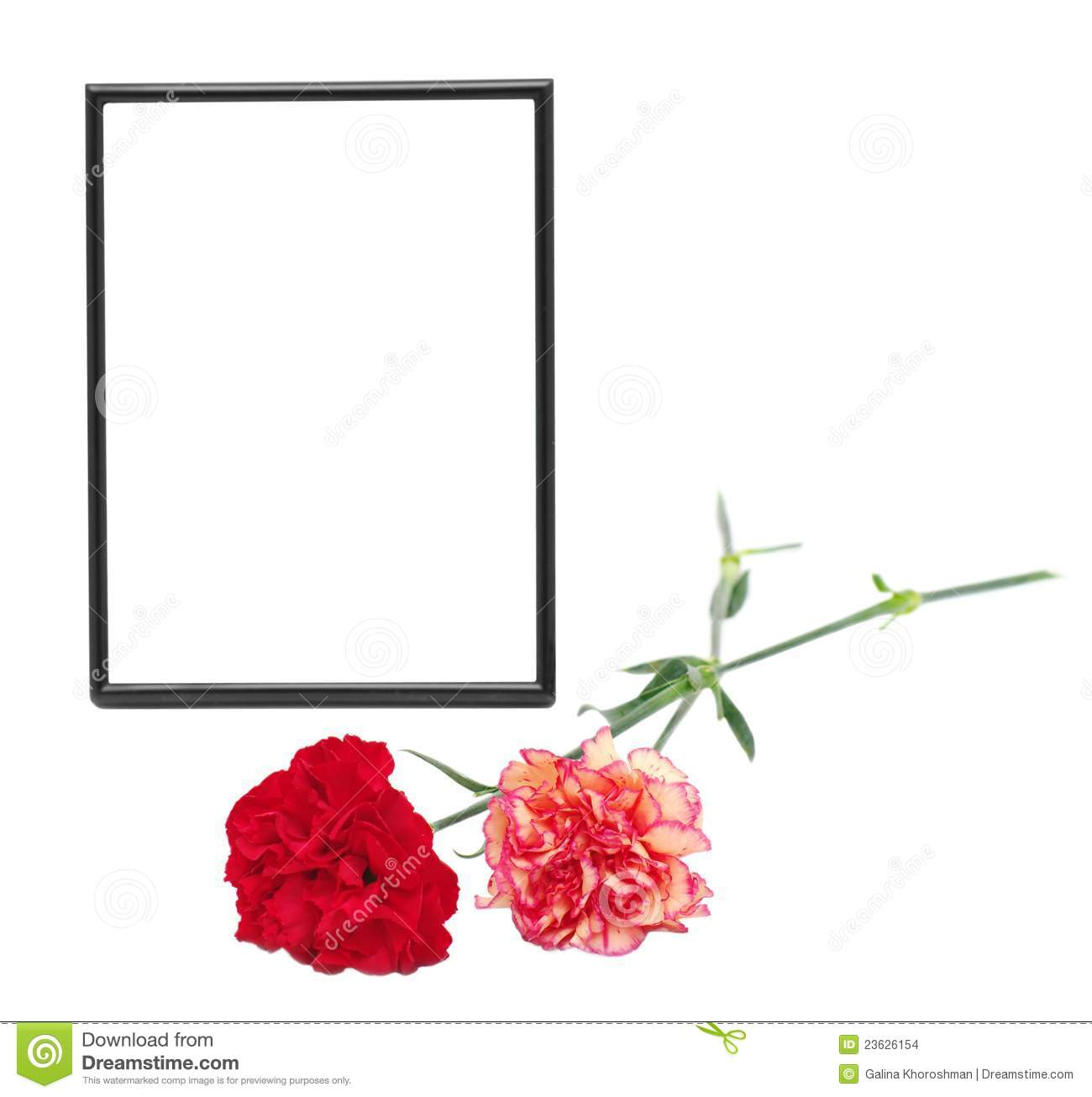 Two Carnations And Black Photo Frame Stock Images   Image  23626154