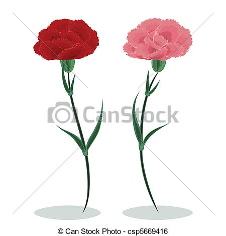 Two Carnations   Csp5669416