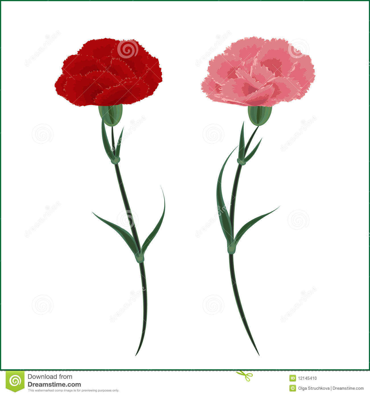 Two Carnations   Red And Pink On A White Background