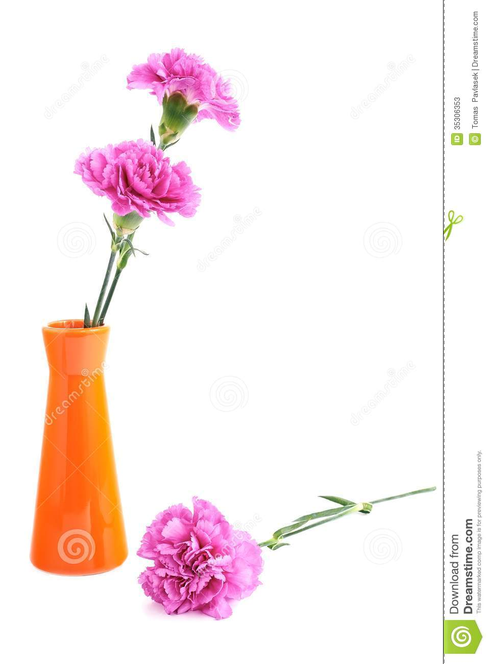 Two Pink Carnation In A Small Vase On A White Background