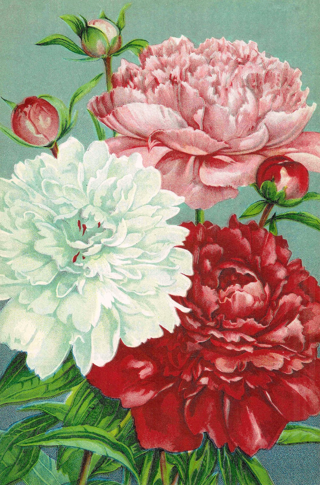 Vintage Flower Clip Art  Pink Red And White Carnations From Vintage
