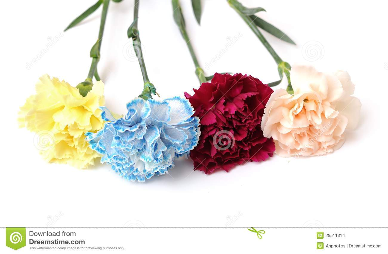 Yellow Purple Blue And Orange Pink Carnations On White Background