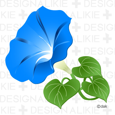 Morning Glory Flower Pictures Of Clipart And Graphic Design And
