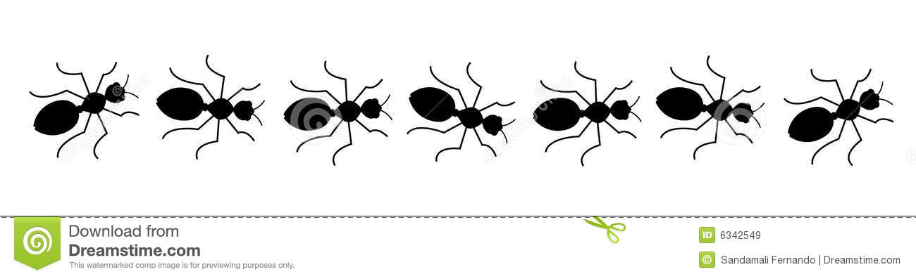 Black Ants Line Royalty Free Stock Images   Image  6342549