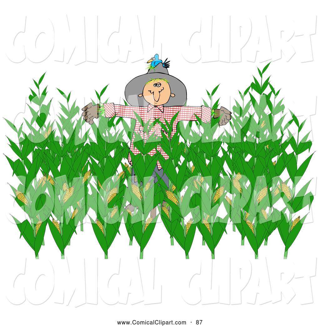 Comical Clip Art Of A Scarecrow In A Harvest Corn Field By Djart    87