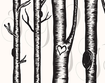 Birch Tree Digital Clip Art   Hand Drawn Winter Aspen Christmas Tree