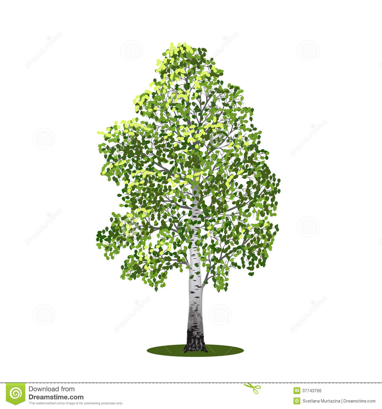 Detached Tree Birch With Leaves Vector Illustrati Royalty Free Stock