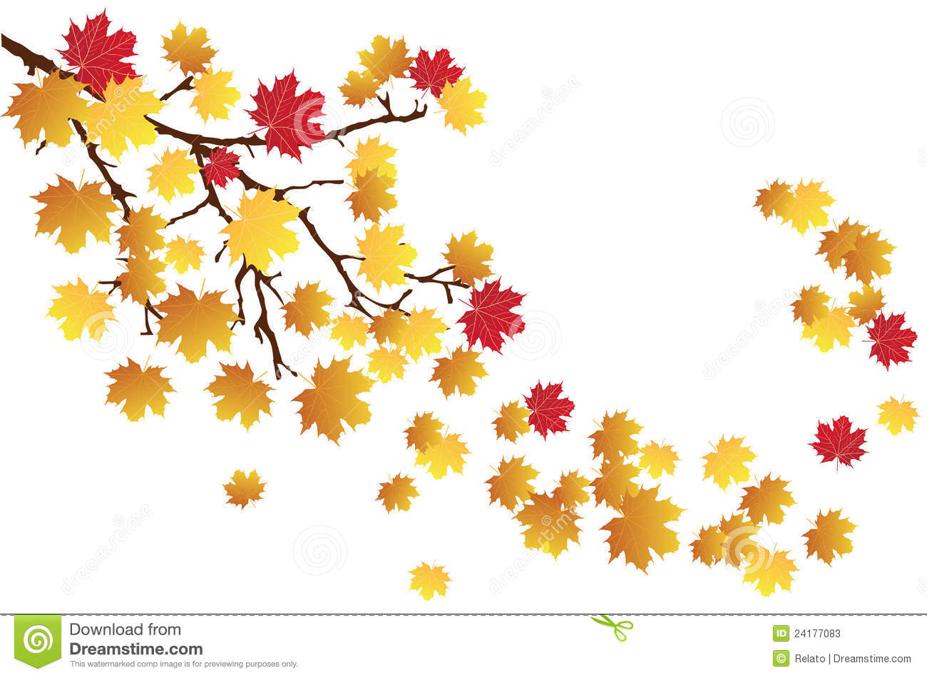 Fall Branch Stock Photos   Image  24177083