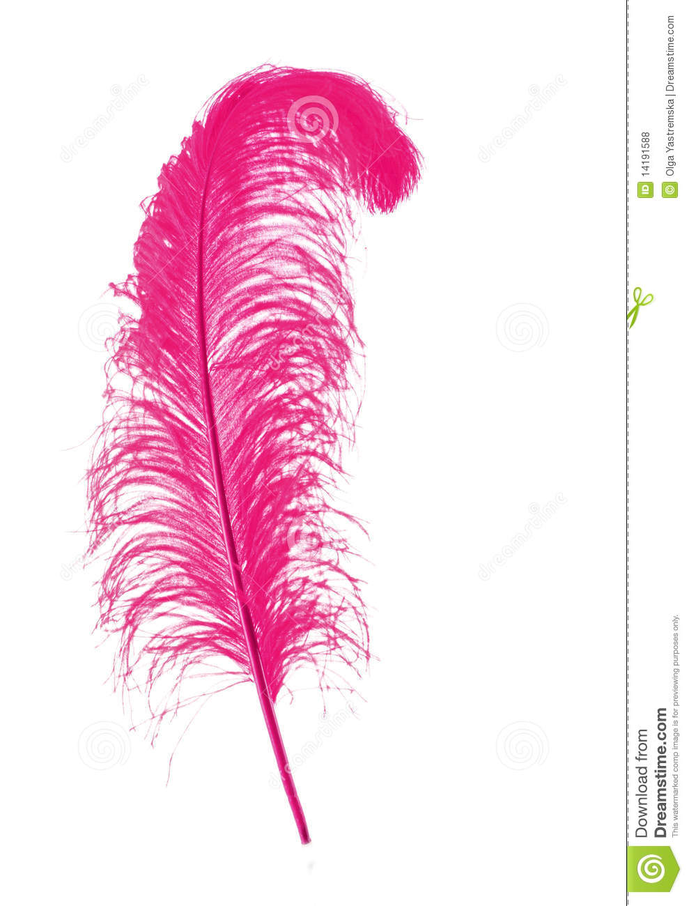 Feather Royalty Free Stock Photos   Image  14191588