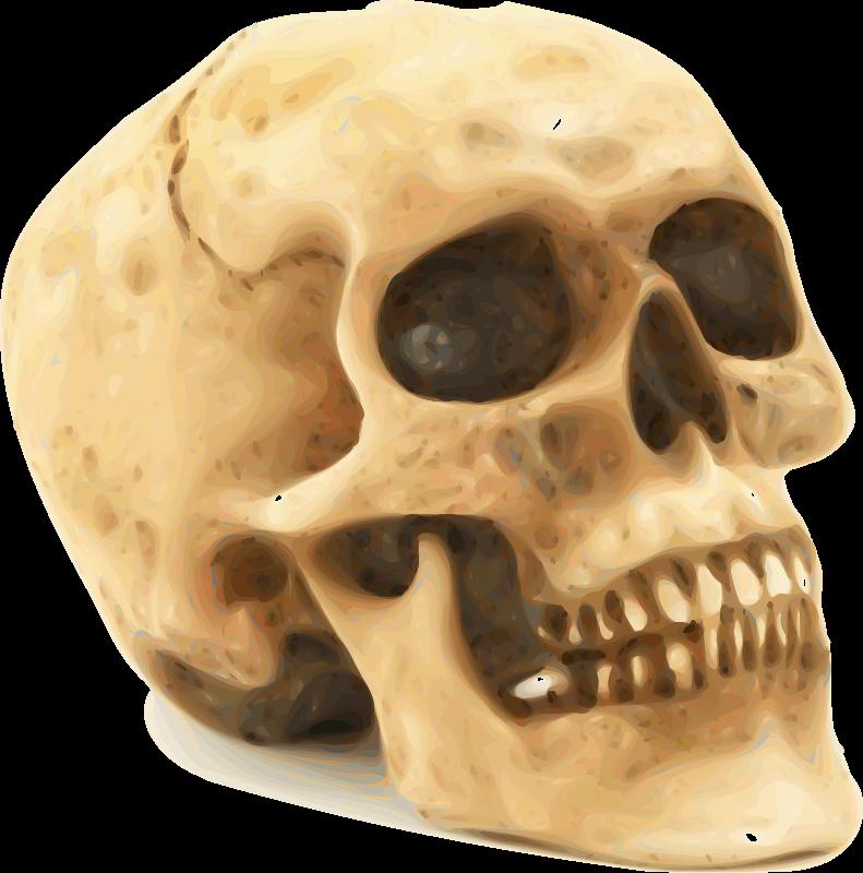 Free Human Skull Clip Art