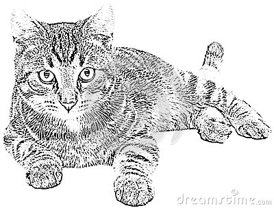 This Is A Bitmap Raster Graphic Of A Cat