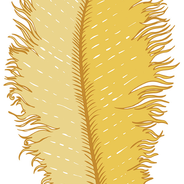 Wispy   Pink Feather Clip Art   Illustrations On Creative Market