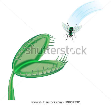 Venus Fly Trap Clipart Towards A Venus Flytrap
