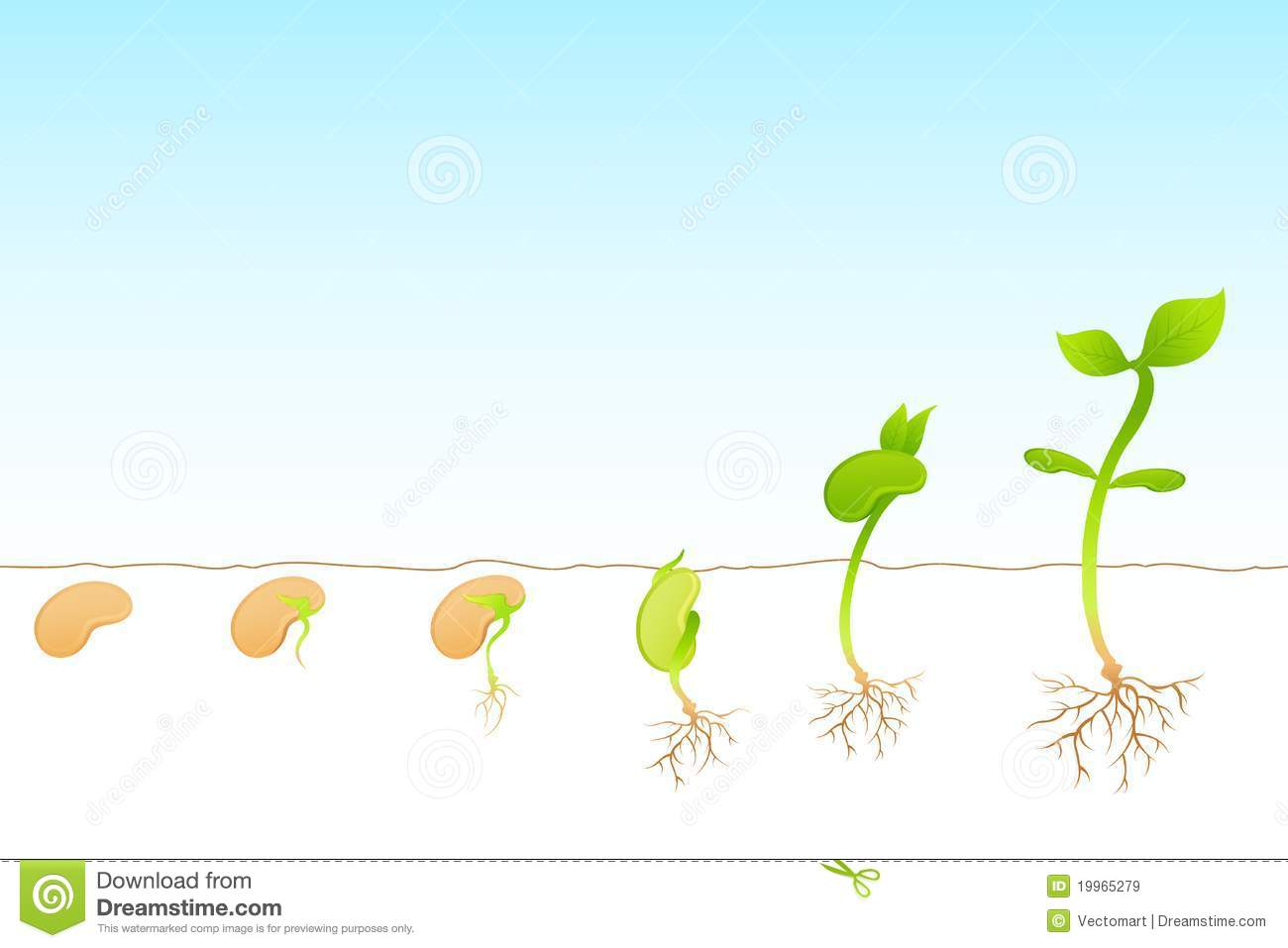 Plant Growth Royalty Free Stock Images   Image  19965279
