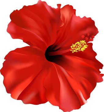 25 Hibiscus Flower Clip Art Free Cliparts That You Can Download To You