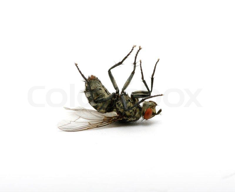 Dead Fly Clipart - Clipart Kid