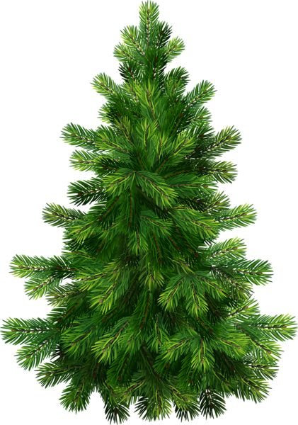 Christmas pine clipart clipart kid