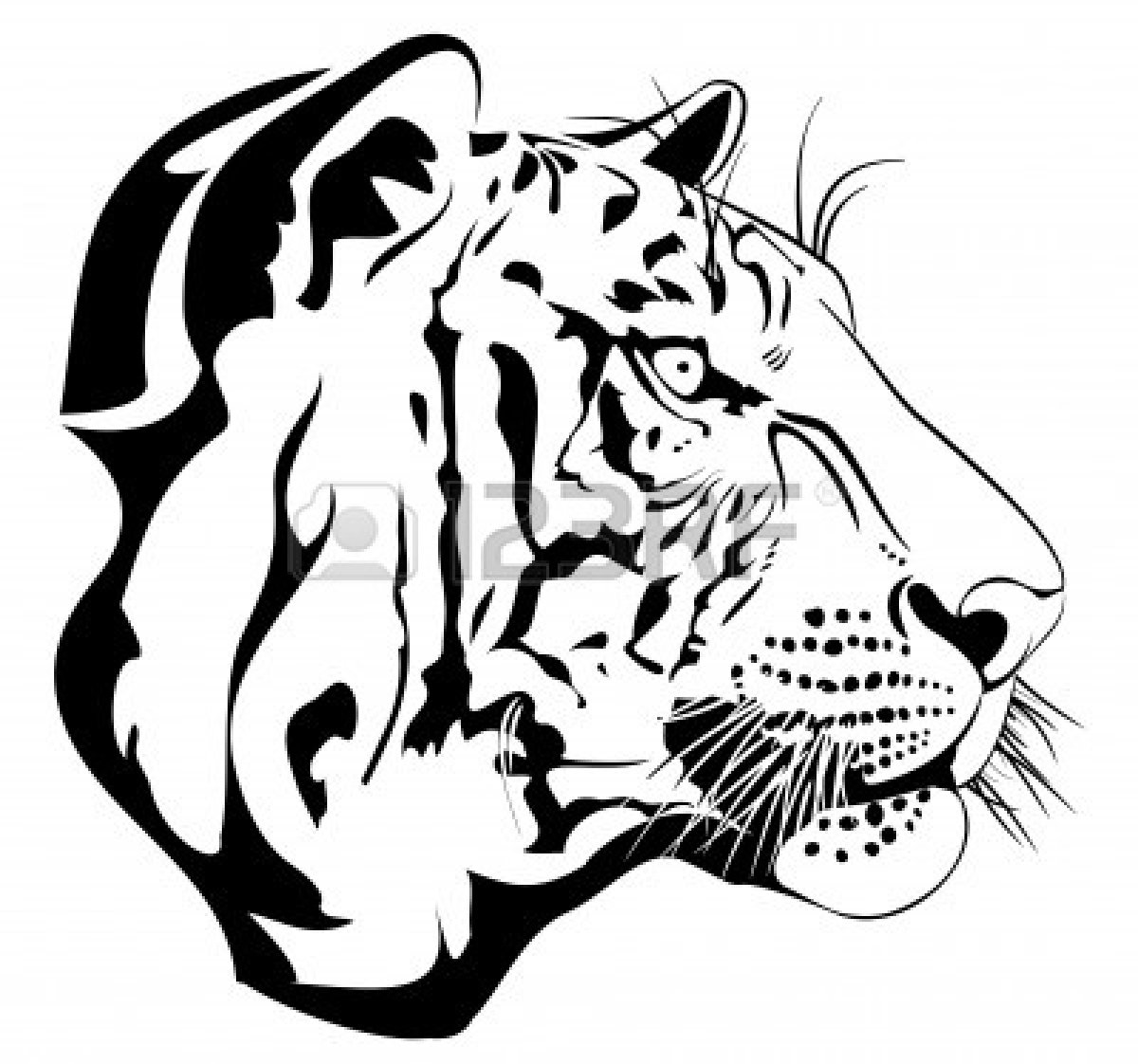 Tiger Eyes Drawing   Clipart Panda   Free Clipart Images