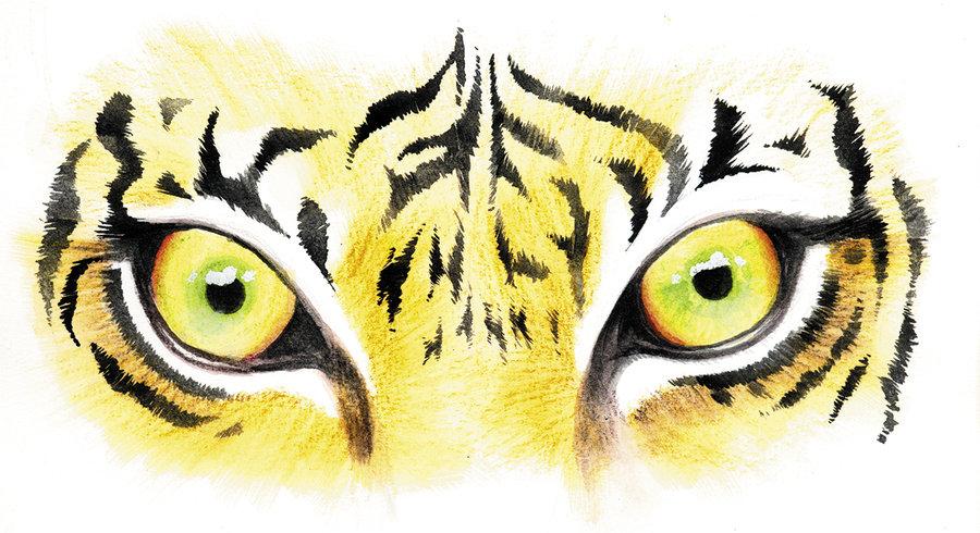 Tiger Eyes Drawing Tiger Eyes By Sinccolor D3ajkvb Jpg