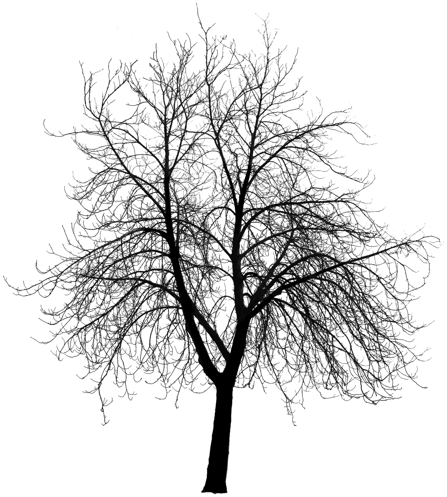 Dead Tree Silhouette Clipart - Clipart Kid