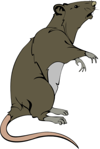 Rat Black And White Clipart - Clipart Suggest