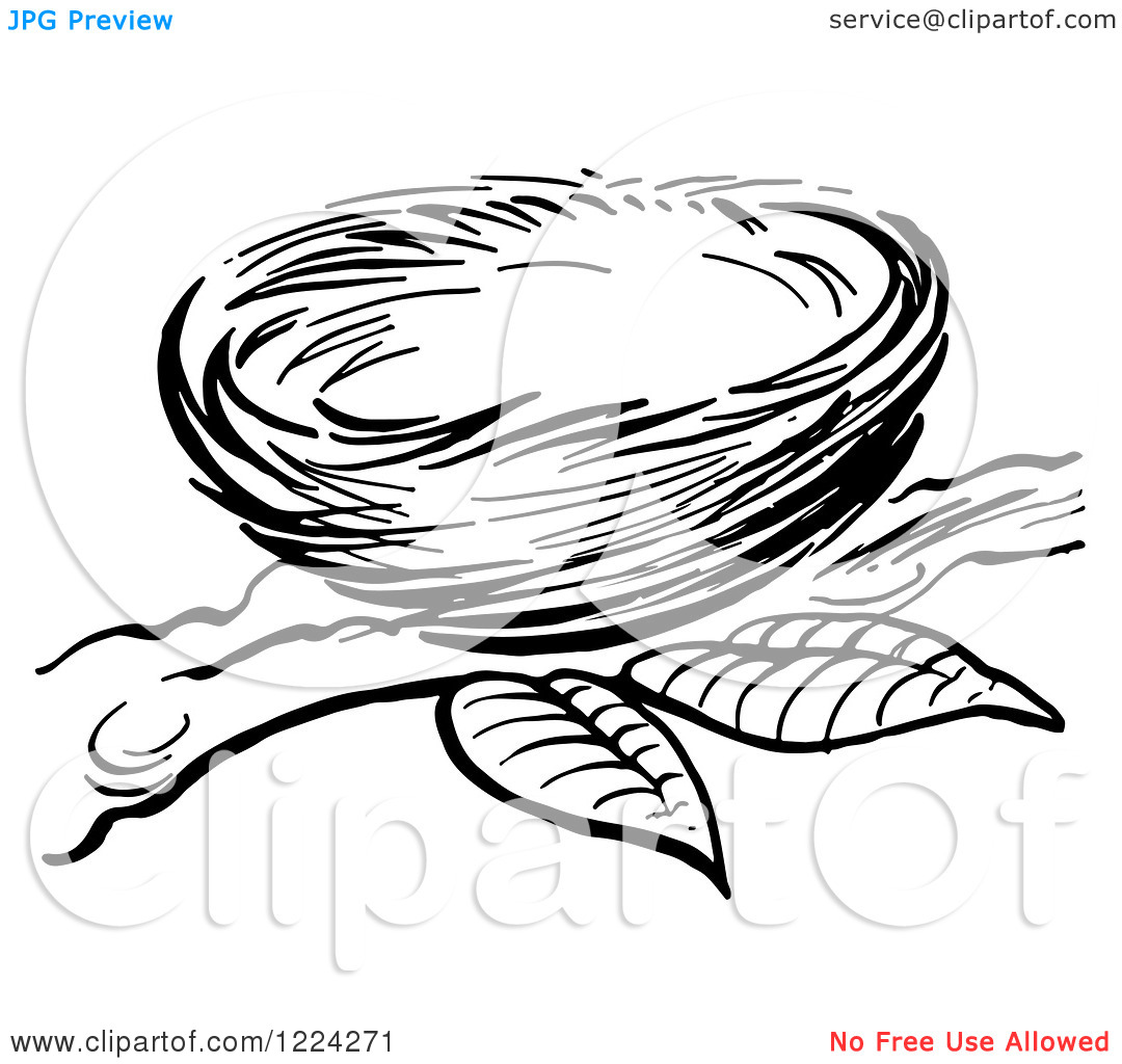 Adult Best Bird Nest Coloring Page Gallery Images best empty bird nest coloring sheet pages now branch drawing tattoo pictures to pin on images