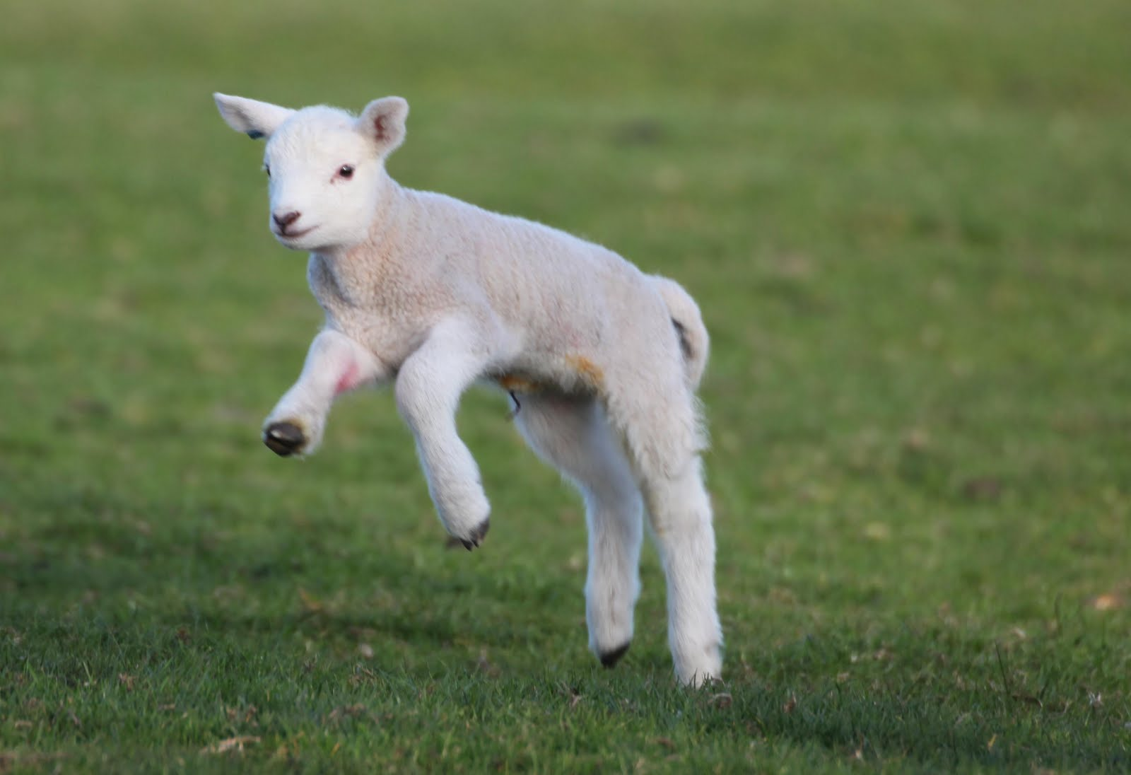 Thank You To Danielle Freaney For These Images Of Some Of Our Lambs
