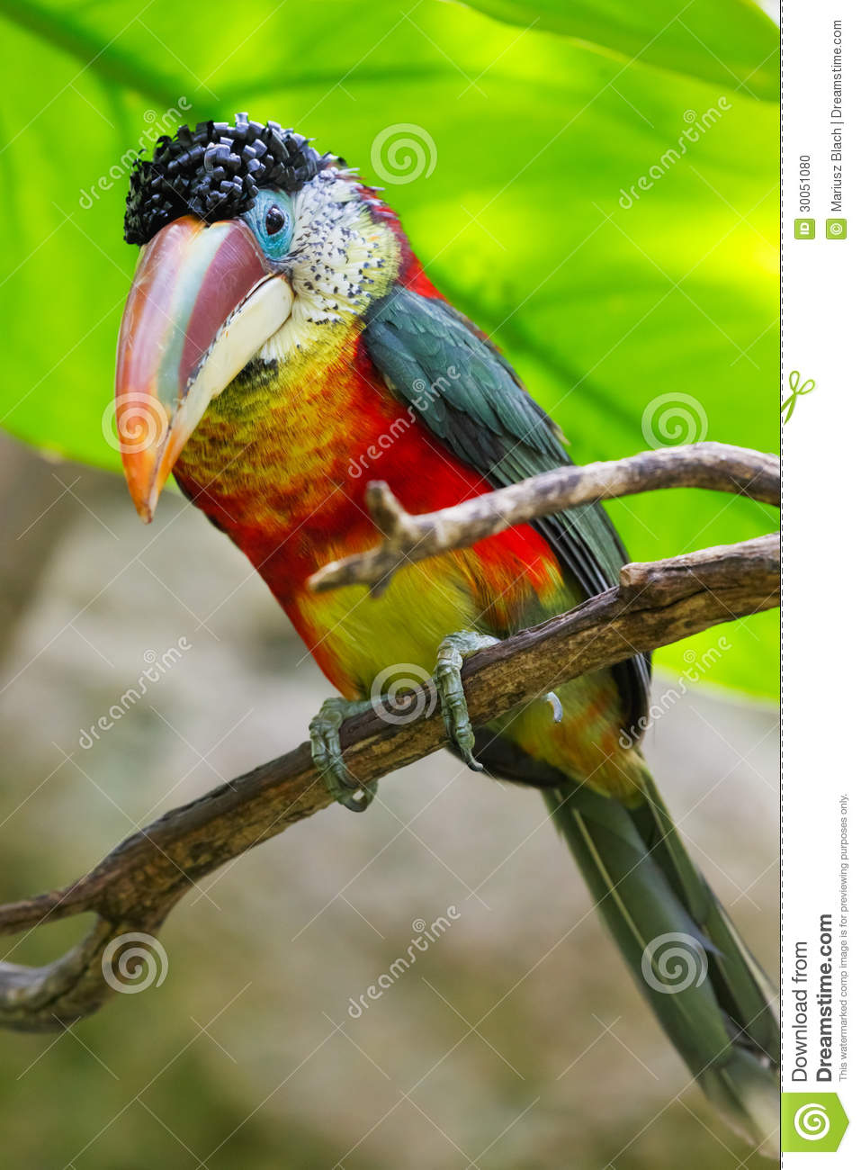 Rainforest Bird Clipart Clipart