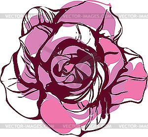 Pink Tea Rose   Vector Clipart   Vector Image