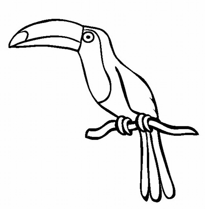 Rainforest Bird Clipart - Clipart Kid