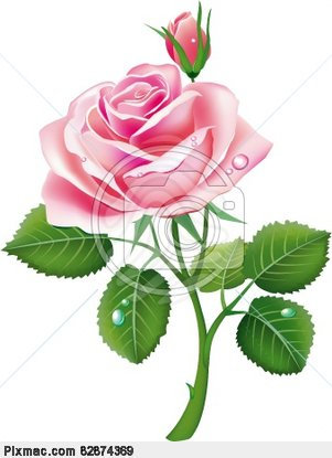 Vector Image Of Beautiful Pink Rose   Vector Graphics And Images