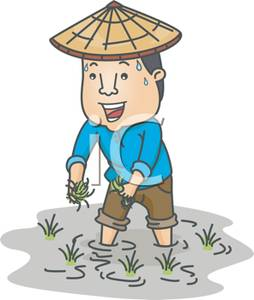 An Asian Farmer Working In A Rice Field   Royalty Free Clipart Picture