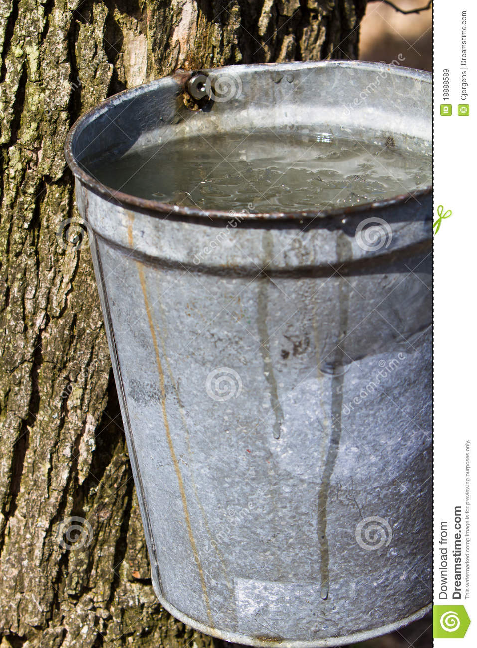 Full Sap Bucket Royalty Free Stock Images   Image  18888589