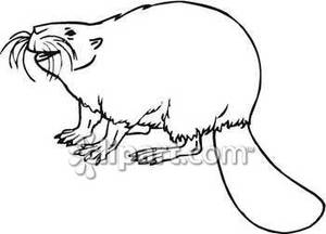 Smiling Black And White Beaver   Royalty Free Clipart Picture