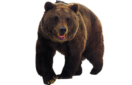 Bear Clipart - Clipart Suggest