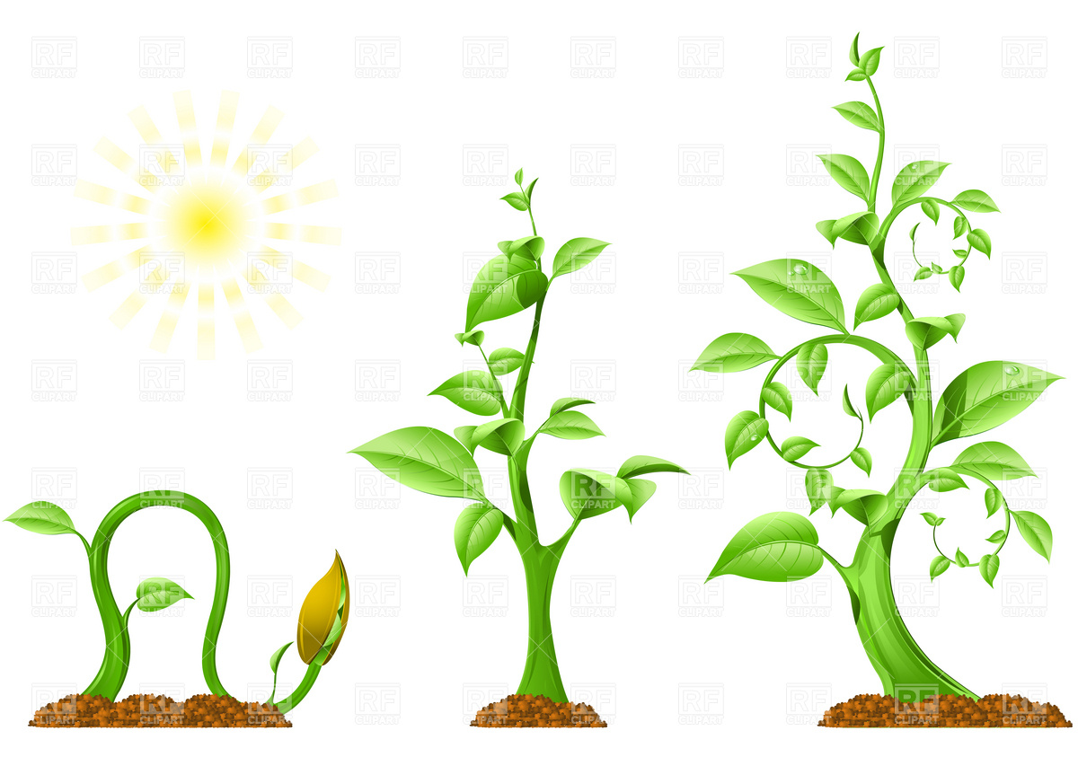 Clipart Catalog   Plants And Animals   Plant Growth Download Royalty