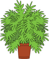 House Plant In Planter Clipart