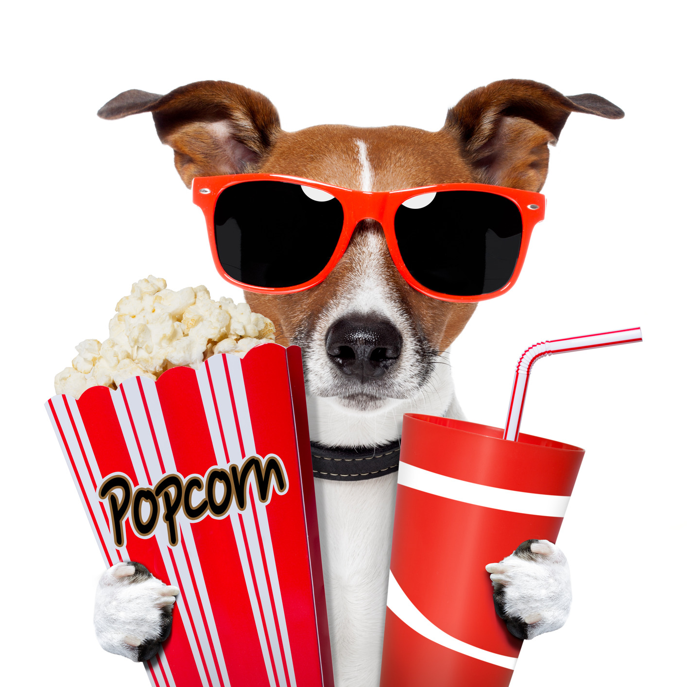 Movie Night Clipart   Clipart Panda   Free Clipart Images